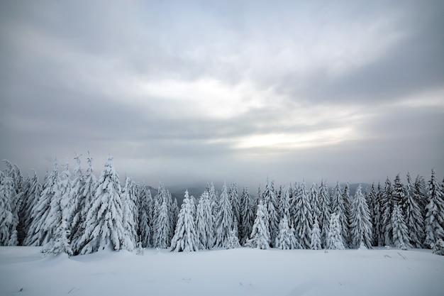 Moody paesaggio invernale della foresta di abete rosso rannicchiata con neve profonda in montagne ghiacciate bianche e fredde.