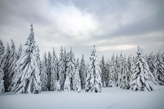 Moody paesaggio invernale della foresta di abete rosso rannicchiata con neve profonda in montagne ghiacciate bianche fredde.
