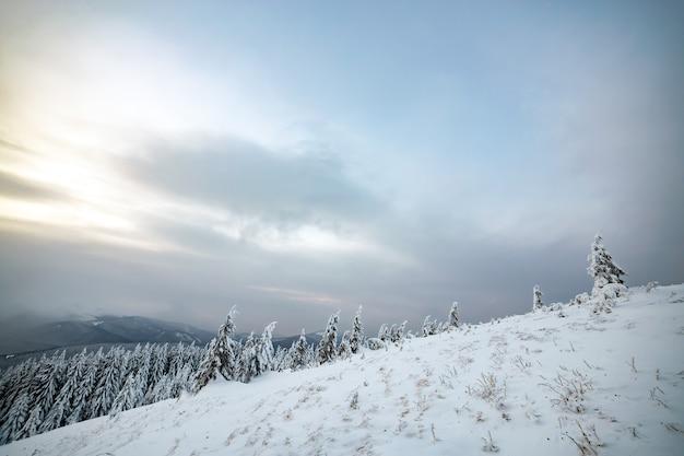 Moody paesaggio invernale di boschi di abete rosso rannicchiata con neve bianca e profonda in altopiani ghiacciati freddi.