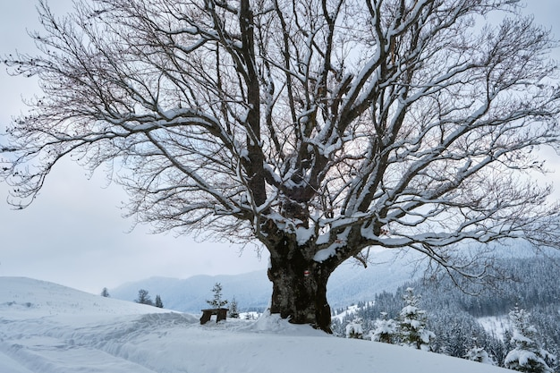 Paesaggio invernale lunatico con albero nudo scuro coperto di neve fresca caduta in montagne invernali in una fredda giornata uggiosa.