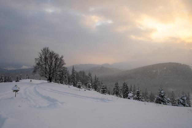 Paesaggio invernale lunatico con albero nudo scuro coperto da un campo di neve fresca caduta in montagne invernali in una fredda sera cupa.