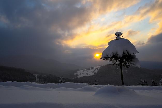 Paesaggio invernale lunatico con un piccolo pino coperto di neve fresca caduta in montagne invernali in una fredda sera cupa.