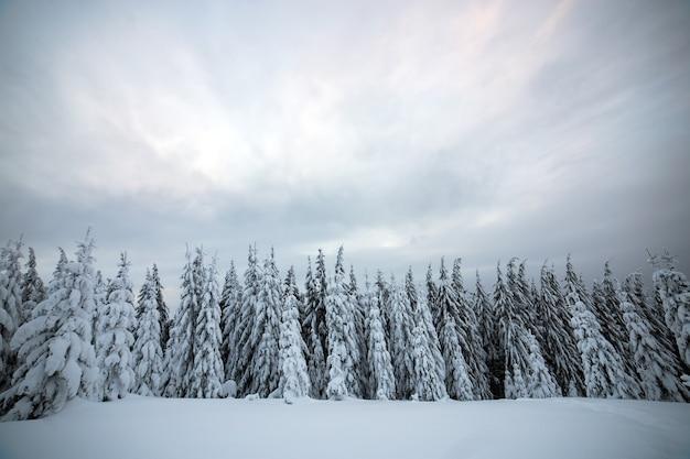 Paesaggio invernale lunatico con foresta di abeti rannicchiata con neve bianca in montagne ghiacciate.