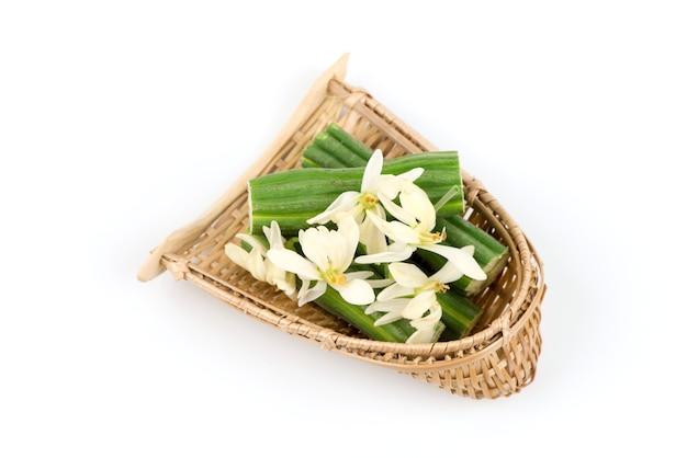 Moringa frutti e fiori isolati su bianco. vista dall'alto, piatto laici.