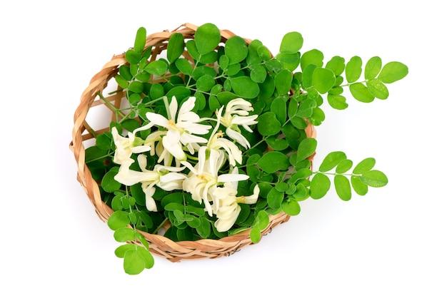Moringa foglie verdi e fiori isolati su bianco .vista dall'alto, piatto laici.
