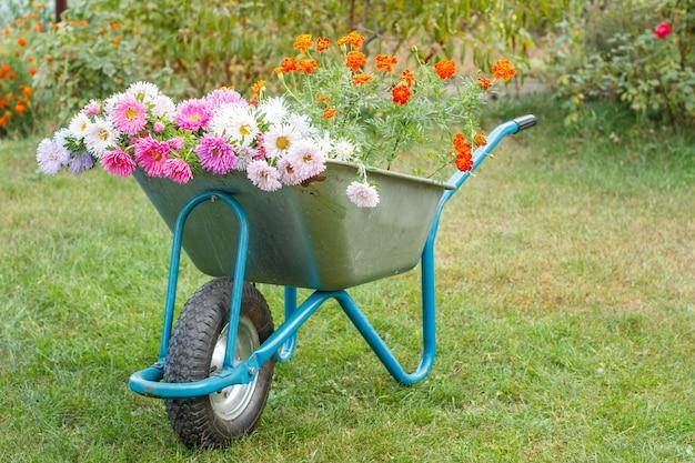 Mattina dopo il lavoro nel giardino estivo. carriola con fiori recisi su erba verde.
