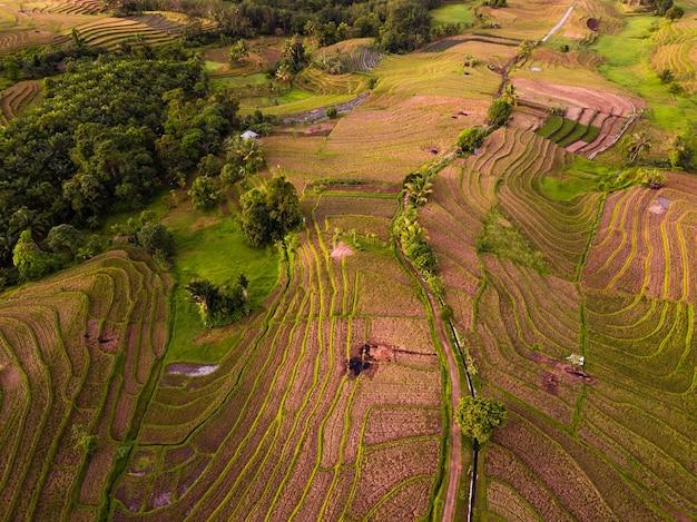 Vista aerea del mattino sulle terrazze di riso indonesiane