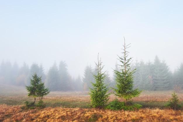 La nebbia mattutina si insinua con scarti sulla foresta di montagna autunnale ricoperta di foglie d'oro.
