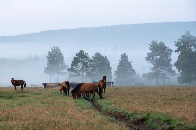 Paesaggio mattutino con cavalli al pascolo nella nebbia sullo sfondo di alberi blu e montagne blu.
