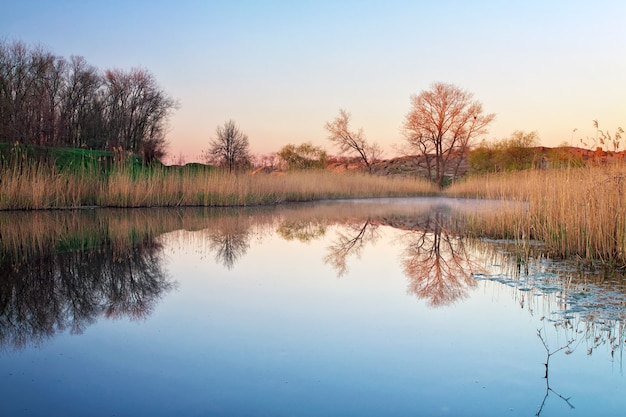Paesaggio mattutino con canne nello stagno