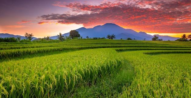 Panorama mattutino con vista sulle montagne e cielo di lava sulle risaie