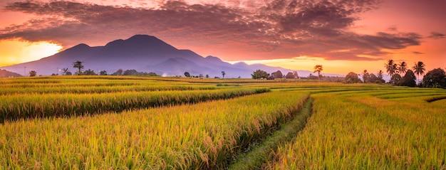 Panorama mattutino con vista sulle montagne e il cielo mattutino sulle risaie