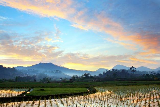 Cielo mattutino sopra il campo di riso