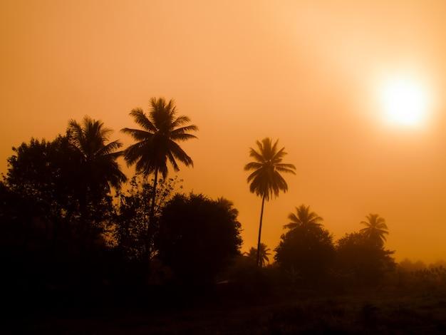 Sole mattutino in mezzo alla nebbia con silhouette di palma da cocco