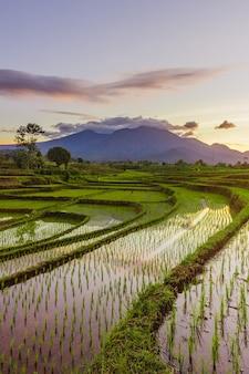 Vista la mattina dei campi di riso con il riflesso del cielo mattutino a bengkulu, indonesia
