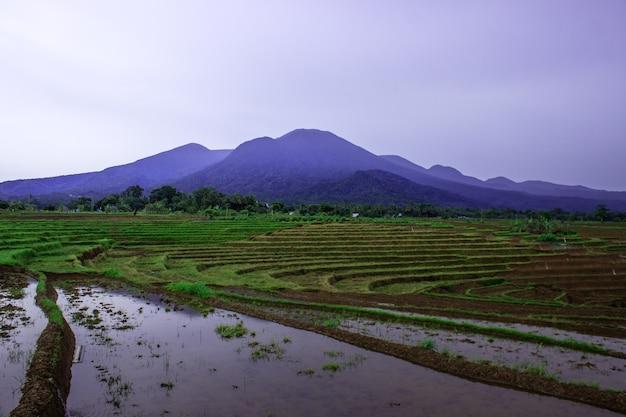 Vista la mattina sulle terrazze di riso con un bel cielo sopra i campi di riso di bengkulu, indonesia