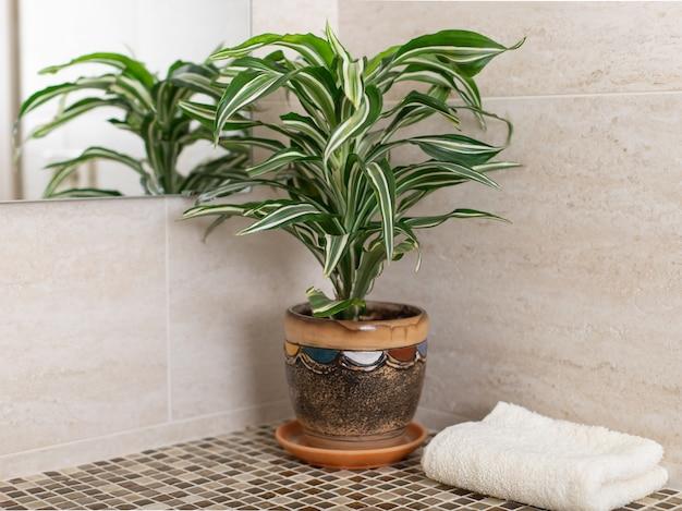 Bancone bagno in mosaico con pianta d'appartamento in vaso e asciugamano pulito. pulizia in bagno. immagine orizzontale