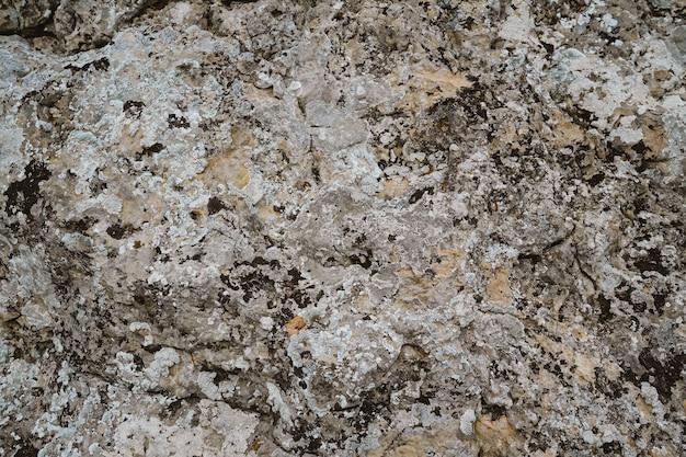 Il muschio cresce sulla pietra. sfondo per il computer. superficie rocciosa in montagna.