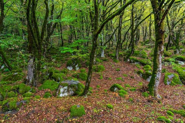 Alberi muschiosi in una foresta mistica verde