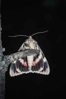 Lepidottero con ali colorate arancione close-up all'aperto.