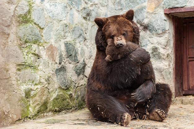 Madre orso con cucciolo carino in giardino zoologico.