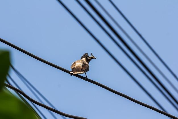 L'uccello madre nutre il bambino
