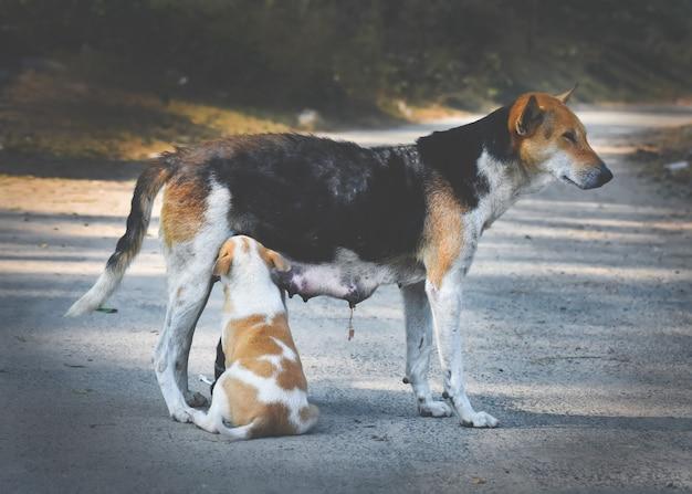 Madre cane che alimenta il suo cucciolo di bambino