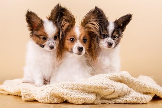 Cane madre con i suoi cuccioli