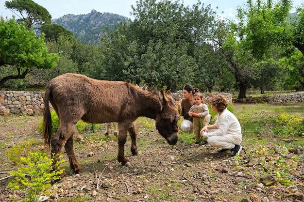 Madre e bambini che giocano con un asino carino in campagna