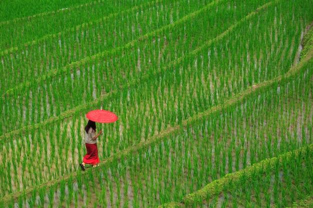 Madre e figlio che camminano nei terrazzi verdi del riso in vacanza al villaggio paing del pa bong, mae-marmellata chiang mai, tailandia