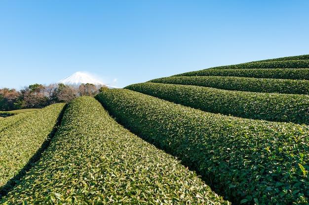 Il monte fuji con la neve e il primo piano della piantagione di tè verde fujinomiya city shizuoka japan