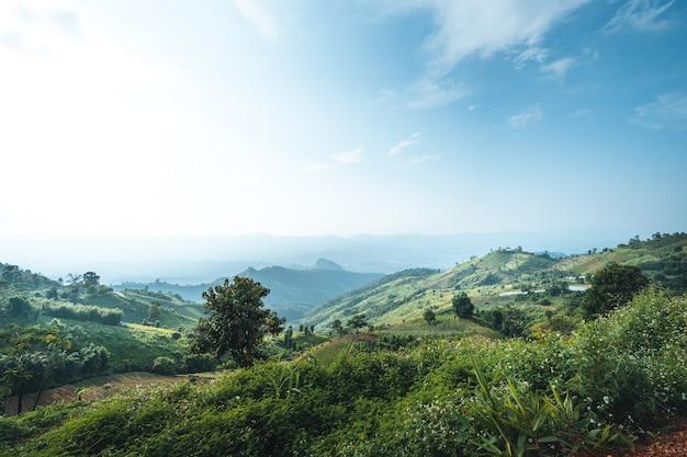 In montagna al pomeriggio, erba verde, aria tersa.