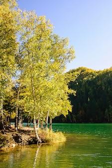 Lago siberia verde di autunno della montagna con la riflessione e la betulla