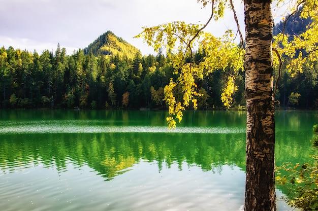Lago siberia verde di autunno della montagna con la riflessione e il ramo di una betulla
