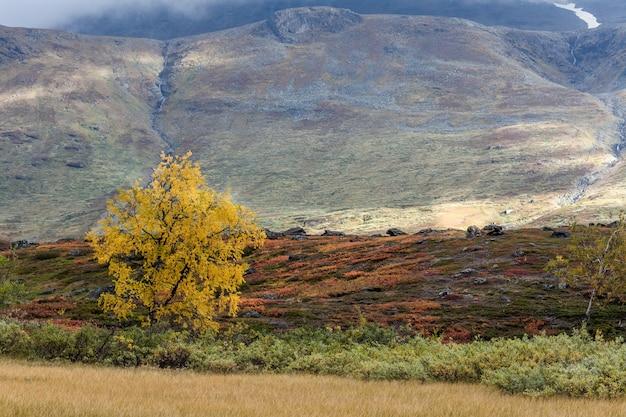 Il paesaggio autunnale di montagna, parco nazionale sarek