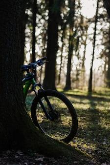 Mountain bike nella foresta al tramonto, concetto sano ed ecologico