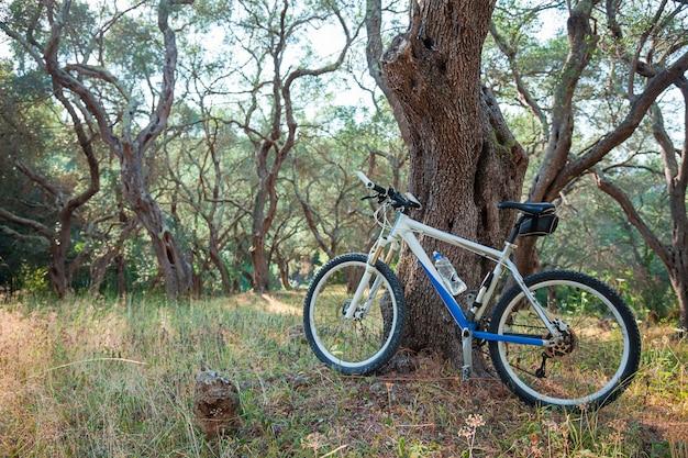 Mountain bike in un uliveto
