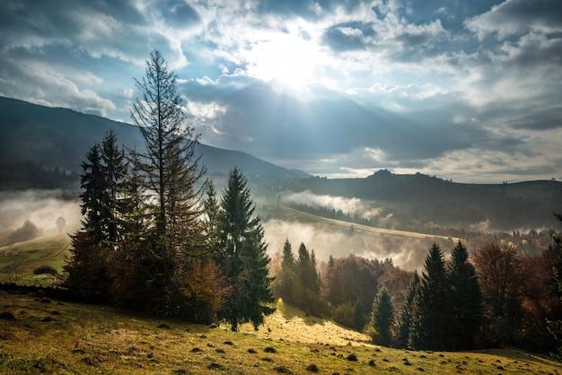 Foresta della montagna sotto il bello cielo nuvoloso su fondo