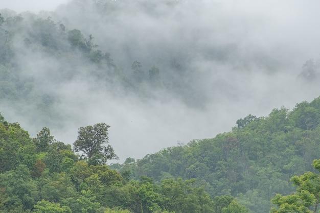 Foresta di montagna nella nebbia dopo la pioggia