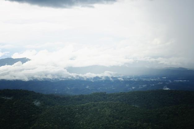 Foresta di montagna e nebbia piovosa