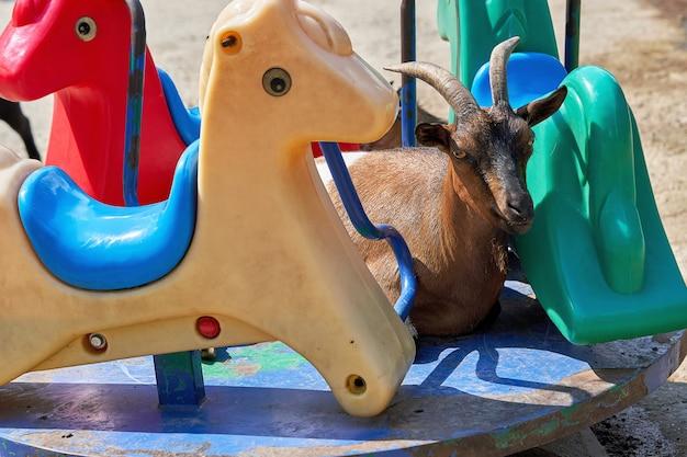 Una capra di montagna dalle lunghe corna giace su una giostra per bambini tra figure di animali in plastica