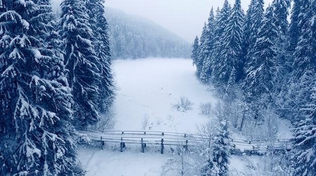 Il lago di montagna synevyr è coperto di neve, un ponte di legno e grandi pini innevati.