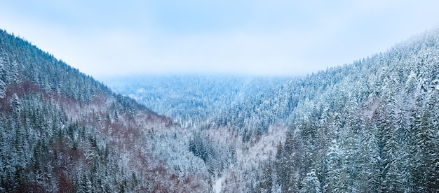 Paesaggio di montagna, bufera di neve sulla foresta di conifere. vista del drone.