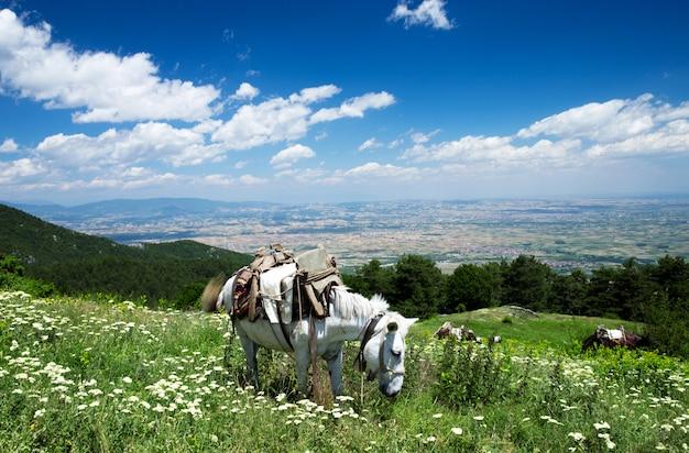 Paesaggio di montagna in grecia