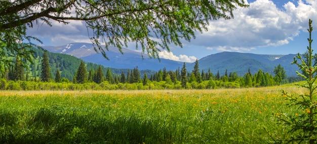 Paesaggio di montagna con prato fiorito, viaggio estivo