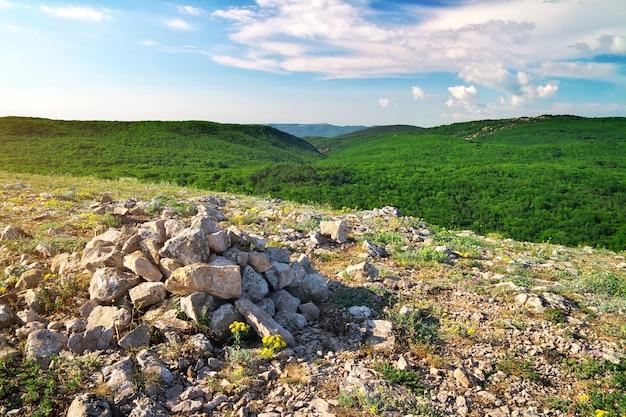 Paesaggio di montagna con fiori e pietre. composizione della natura.