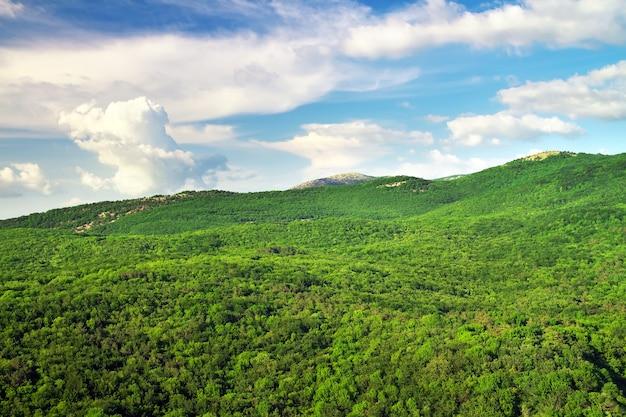 Paesaggio di montagna con alberi verdi. composizione della natura.
