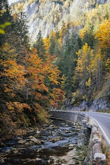 Paesaggio di montagna con un fiume di montagna, alberi autunnali colorati e rocce sullo sfondo.