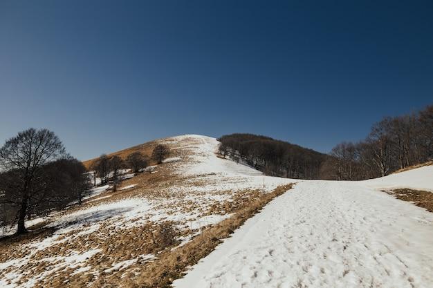 Paesaggio di montagna con neve, alberi, erba e cielo blu