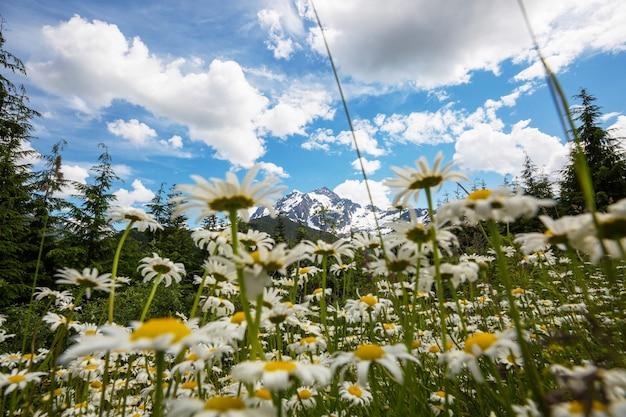 Prato di montagna in alaska, stagione estiva